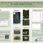 Exploring patterns of thermal acclimation of leaf respiration in a marsh-mangrove ecotone poster