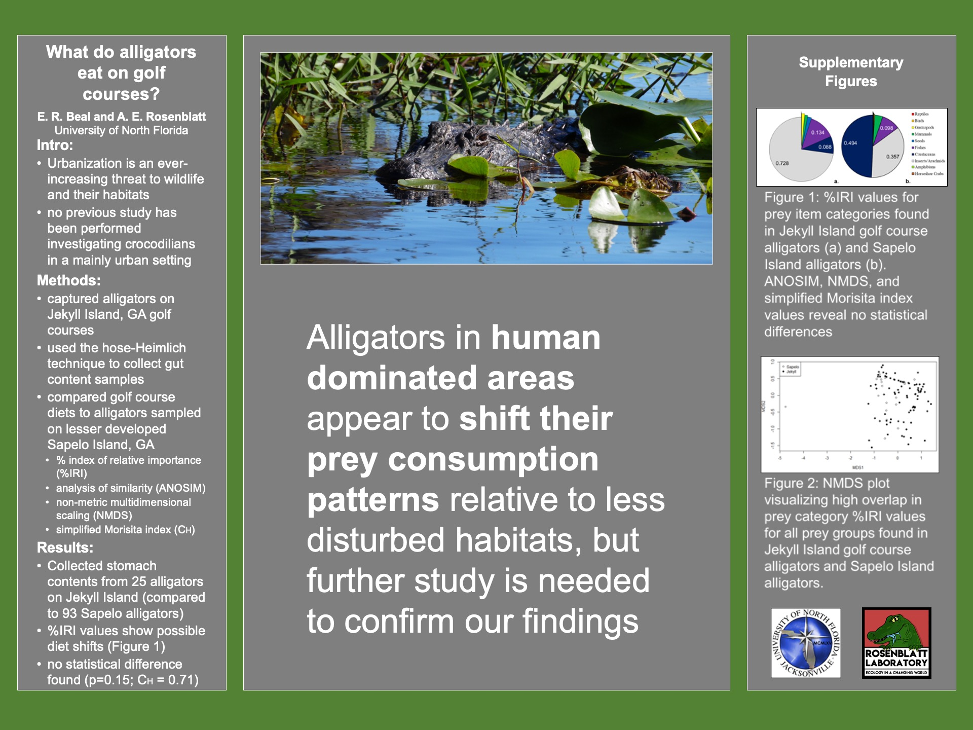 What do alligators eat on golf courses? poster