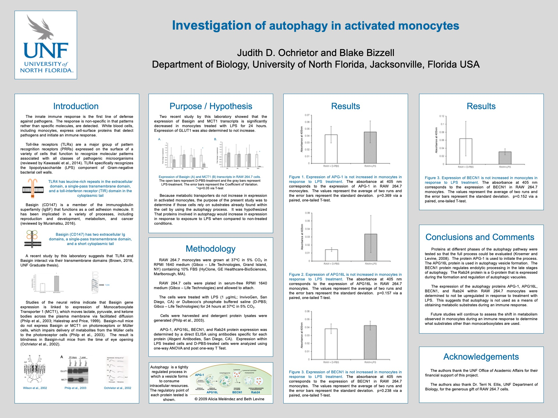 Investigation of autophagy in activated monocytes poster