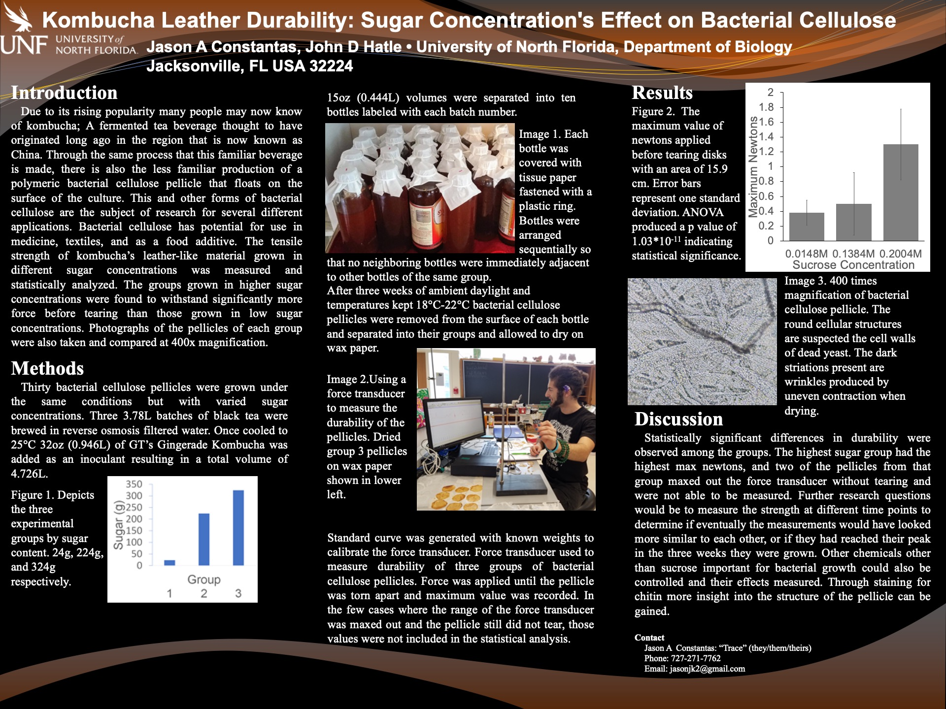 Kombucha Leather Durability: Sugar Concentration's Effect on Bacterial Cellulose poster