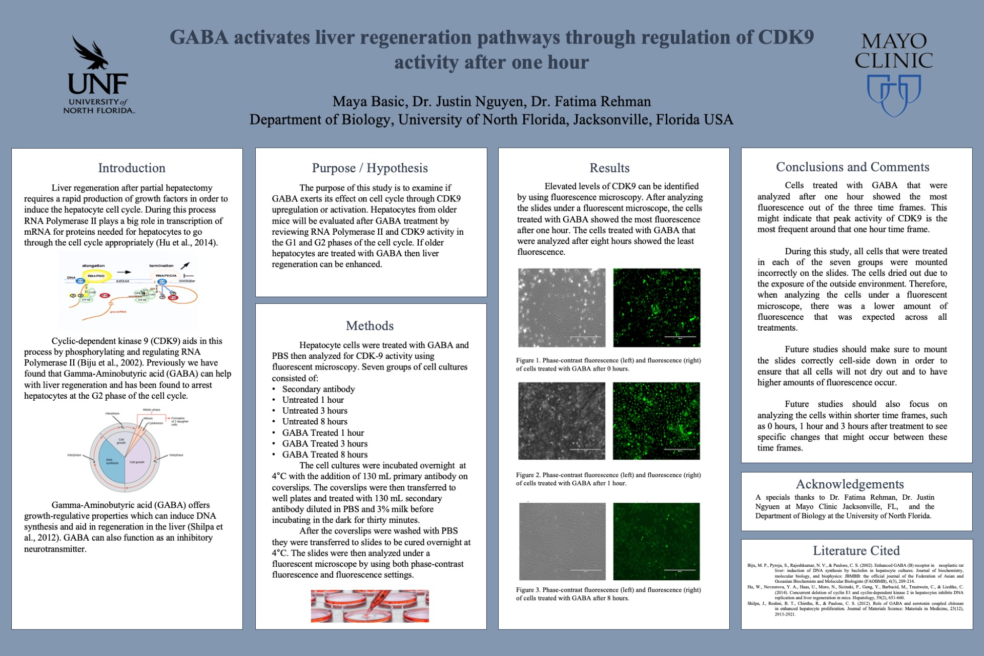 GABA activates liver regeneration pathways through regulation of CDK9 activity after one hour poster