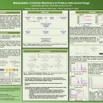 Manipulation of Cellular Machinery to Produce Anti-cancer Drugs poster