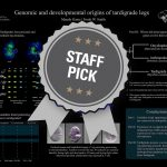 Genomic and Developmental Origins of Tardigrade Legs Staff Pick poster