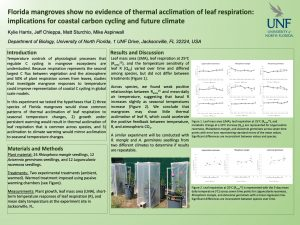 Florida mangroves show no evidence of thermal acclimation of leaf respiration: implications for coastal carbon cycling and future climate poster